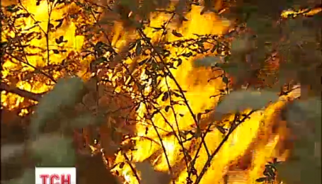 Под Киевом горит лес