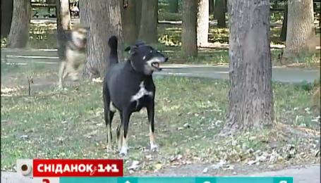 Що загрожує хазяїну, який вигулює собаку без намордника і повідка
