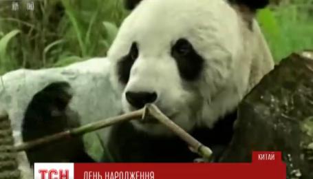 У Китаї найстаріша панда у світі розміняла четвертий десяток