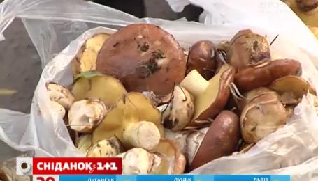 Как правильно собирать и покупать грибы