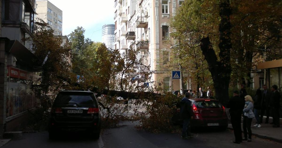 Дерево придавило машины @ facebook.com/leonidgkos