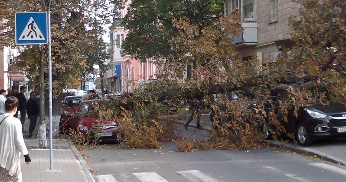 Дерево придавило машини @ facebook.com/leonidgkos
