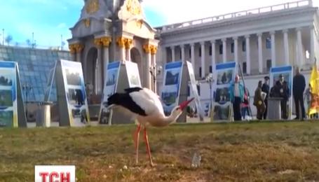 В соцсетях появилось видео, как по Крещатику гуляет аист