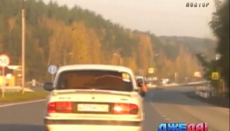 В окрестностях Екатеринбурга разъезжал медведь на такси