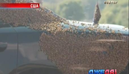 В Оклахоме движение на магистрали остановил рой пчел