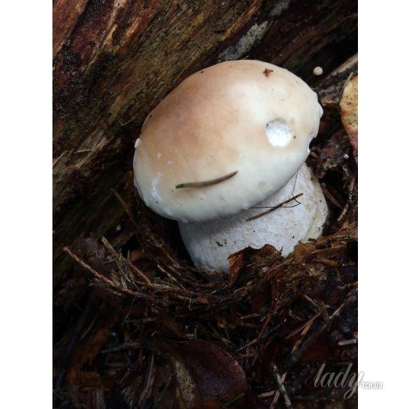 грибы_1