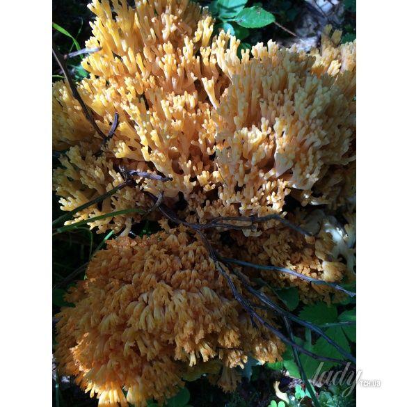 грибы_3