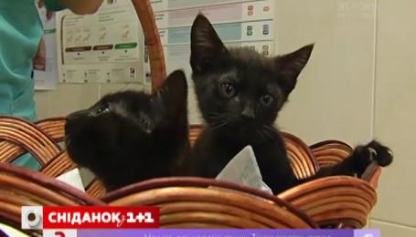 «Сніданок з 1+1» шукає домівку для котиків-близнюків