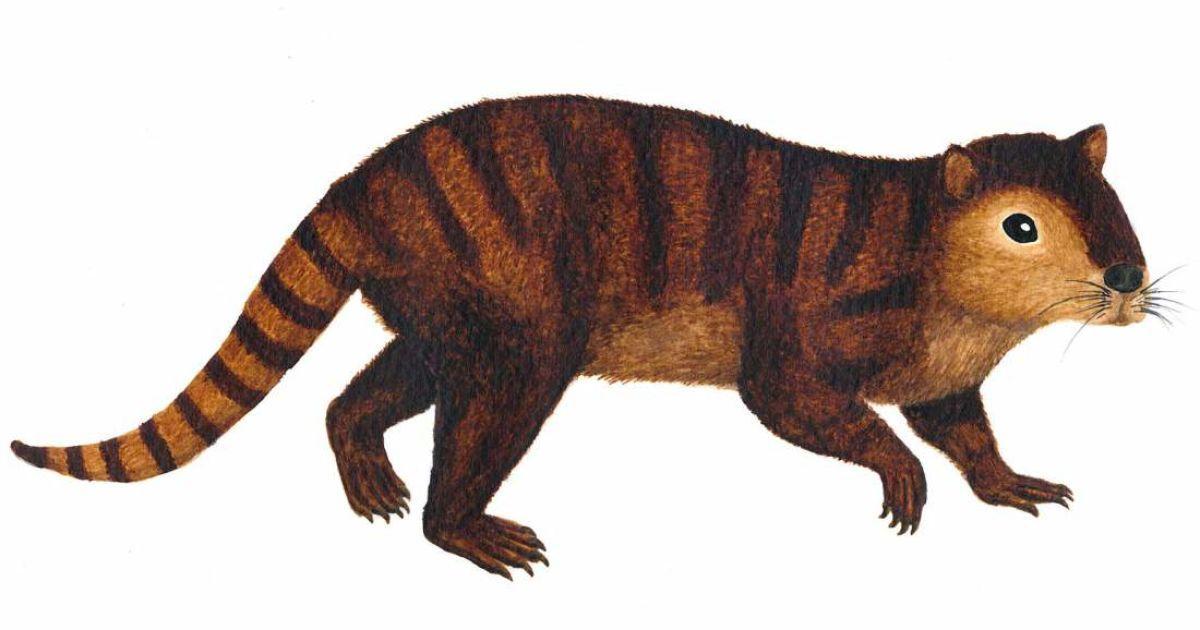 Студенты случайно откопали останки древнейших крыс на планете, которые пережили динозавров