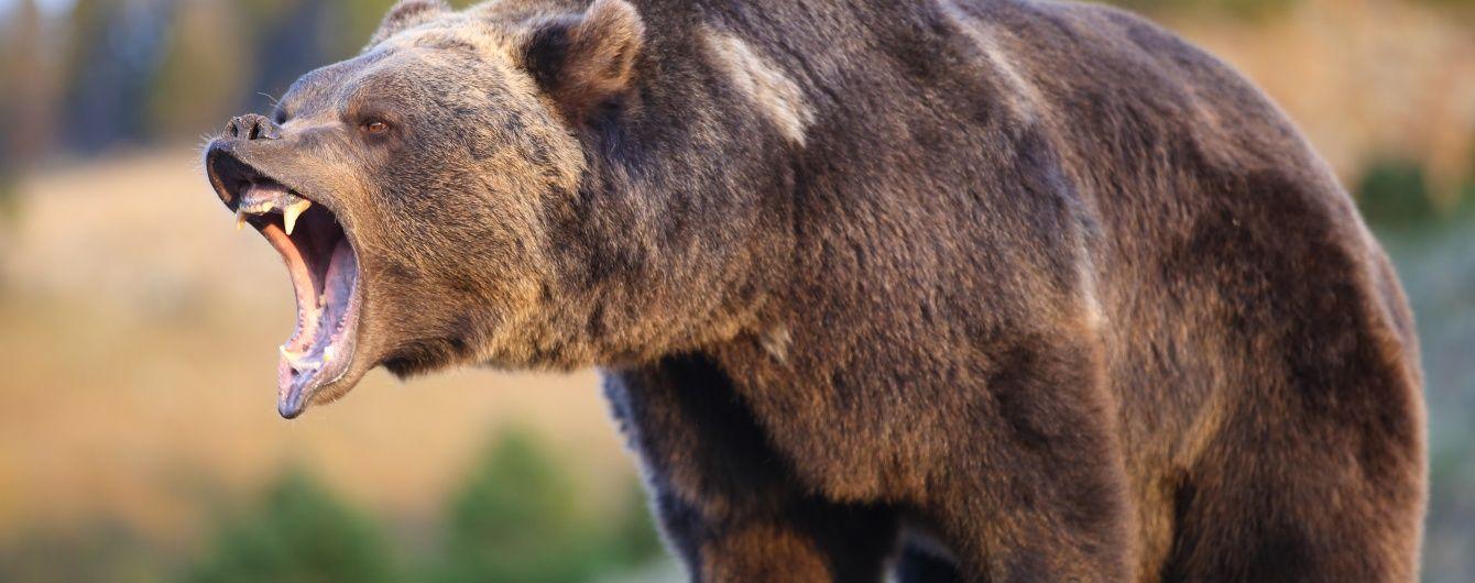 Росіянка народила в тайзі, поки поліцейські за допомогою зброї відганяли від неї ведмедів