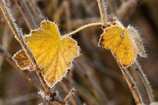 Заморозки и дождь. Прогноз погоды в Украине на 22 сентября