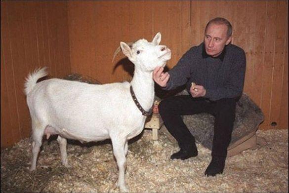 Коза Казка для Путіна