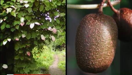 Как вырастить экзотическое растение в своем саду