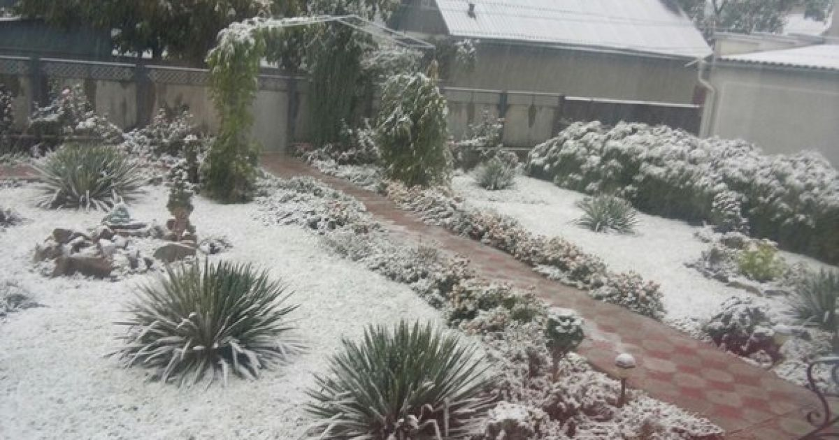Первый снег в Черновцах.