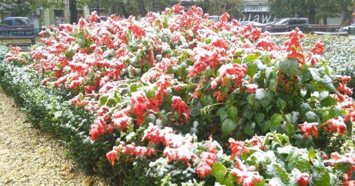 Первый снег в Ивано-Франковске.