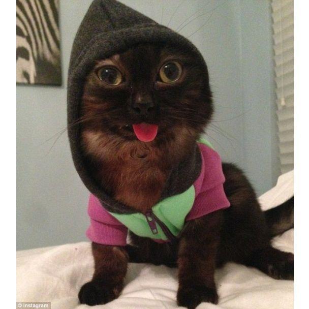 Картинки кот странный