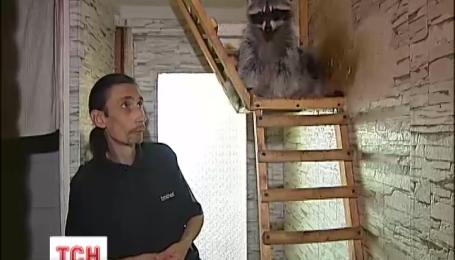 Киянин тримає у невеличкий квартирі двох єнотів
