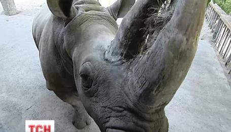 У столичному зоопарку готуються до зими: ведмеді жирують, а носоріг сідає на дієту