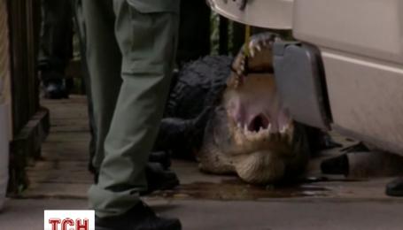 Алігатор напав на чоловіка під час відпочинку у Флориді
