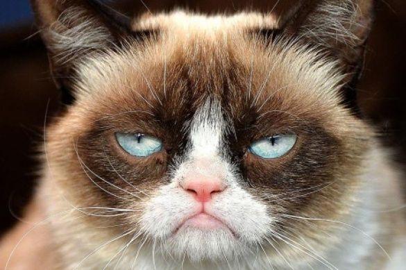 Сердитий кіт