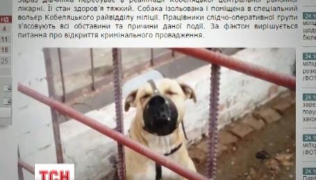 На Полтавщине собака покусала шестилетнюю девочку