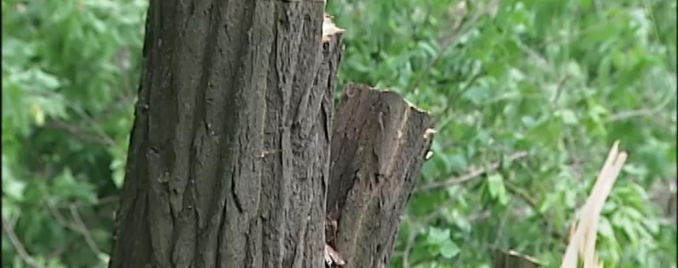 На Київщині перед виборами роздерибанили сотні гектарів легендарного Біличанського лісу
