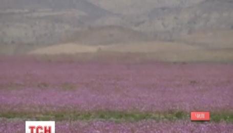 Самая сухая пустыня мира зацвела