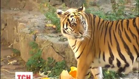В столичном зоопарке готовятся к Хэллоуину