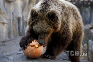 """В Якутії водії двох """"Уралів"""" переїхали ведмедя з криками: """"Дави його"""""""