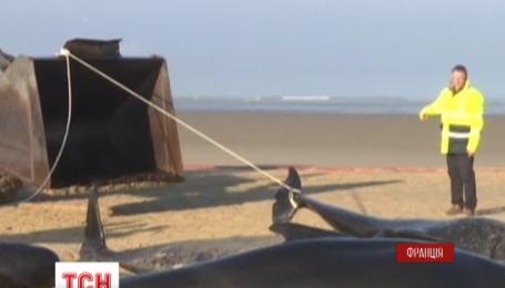Десять китов выбросились на берег Северного моря во французском городе Кале