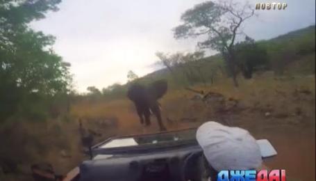 Слон растоптал авто в Южной Африке