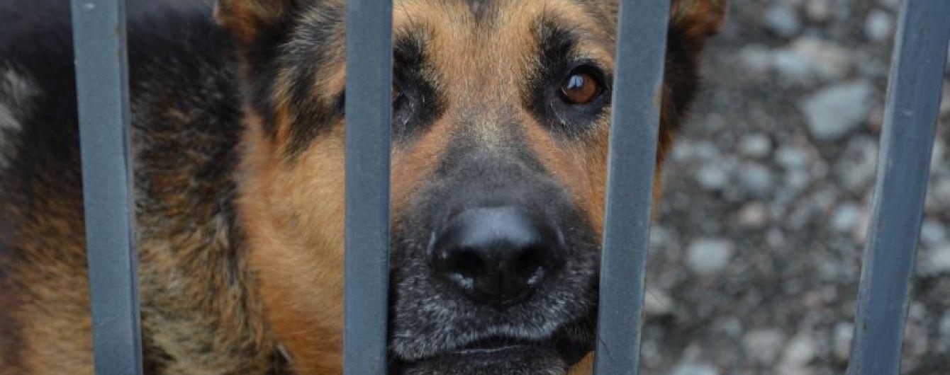 Николаев потерпает от бездомных собак, пострадали сотни людей