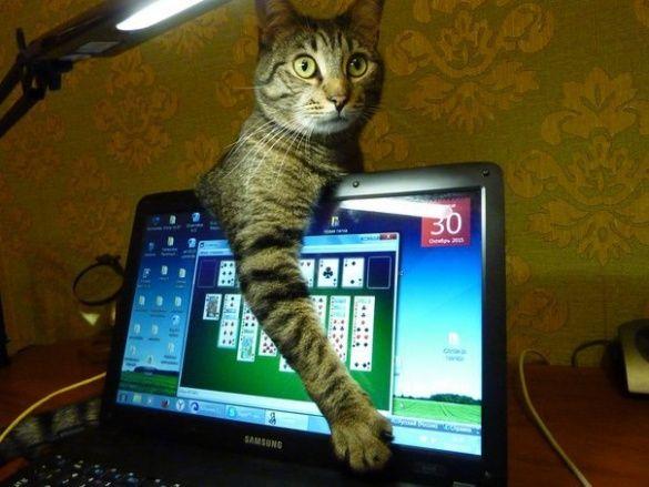 Коты и конфузы_1