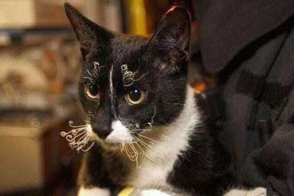 Коты и конфузы_4