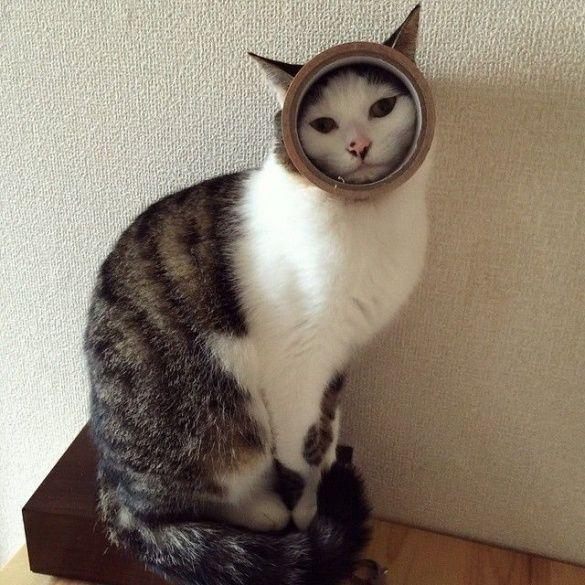Коты и конфузы_6