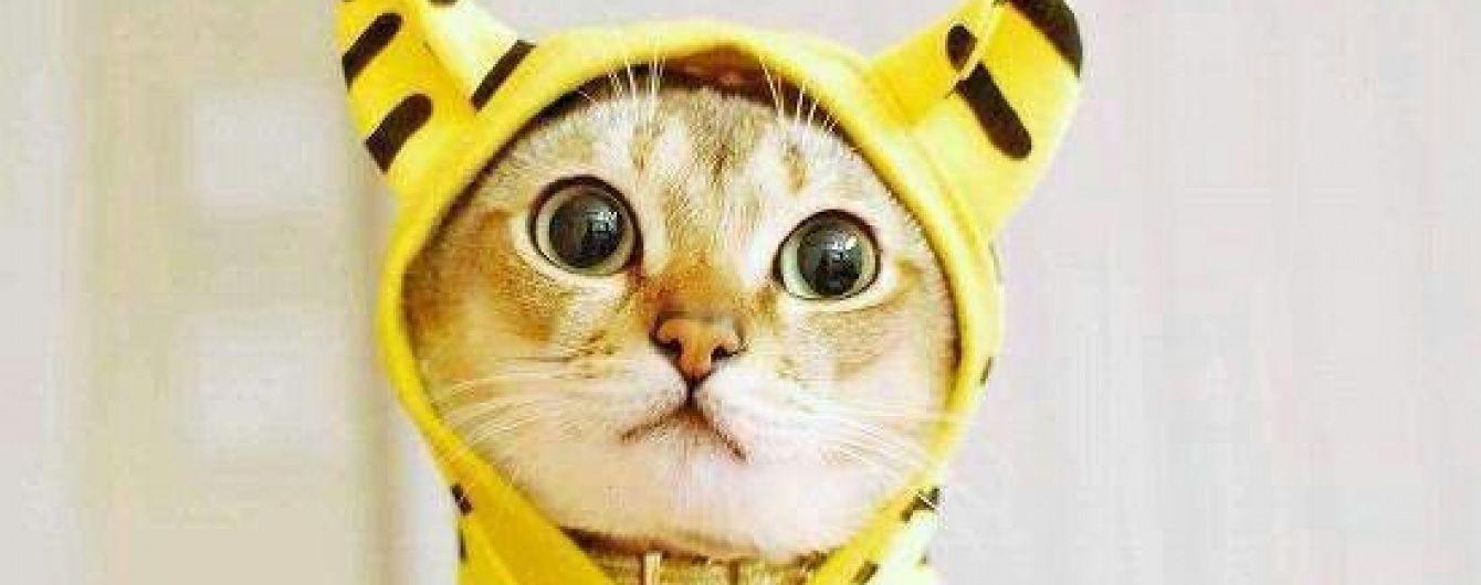 Выходные в Киеве: ГогольFest, выставка кошек и Ukraine Avia Fest