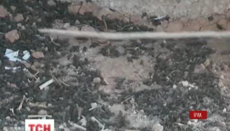 Бойцы группировки пешмерга жалуются на нашествие насекомых