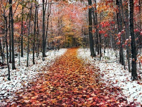 До України сунуть нічні морози до 8 градусів та дощі з мокрим снігом. Прогноз на півтора тижня