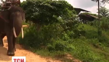 Слони-рятувальники скоро допомагатимуть надзвичайним службам Індонезії боротися з вогнем