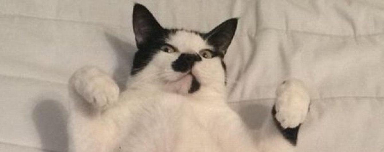 картинка кошка в памперсе мониторить ленту