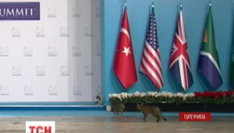 Трое котов прорвались на саммит G20 в Анталии