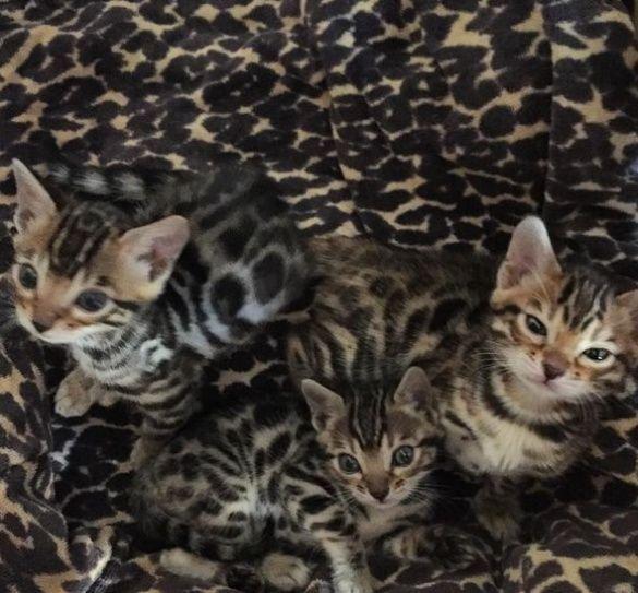 Коты_3