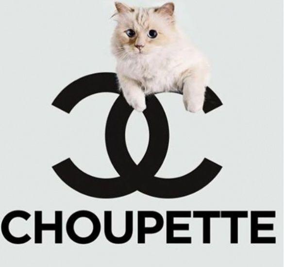 Коты_4