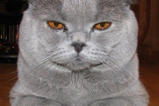В России на сайте полиции появился блог кота Превентива