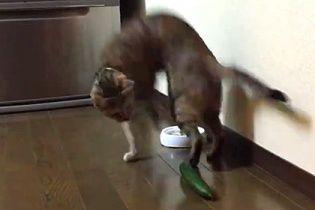 Видео с неожиданной реакцией котов на огурцы стало вирусным
