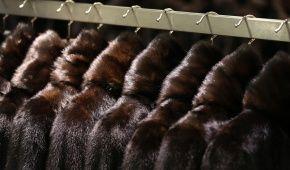 Цены на натуральный мех рекордно взлетели в двараза