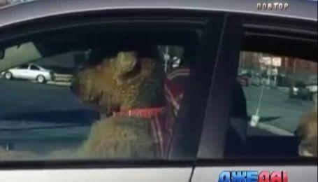 Как собаки-супруги устроили семейные разборки на парковке в США