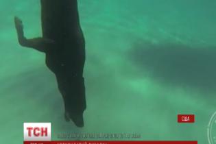 Американец научил лабрадора нырять за лобстерами