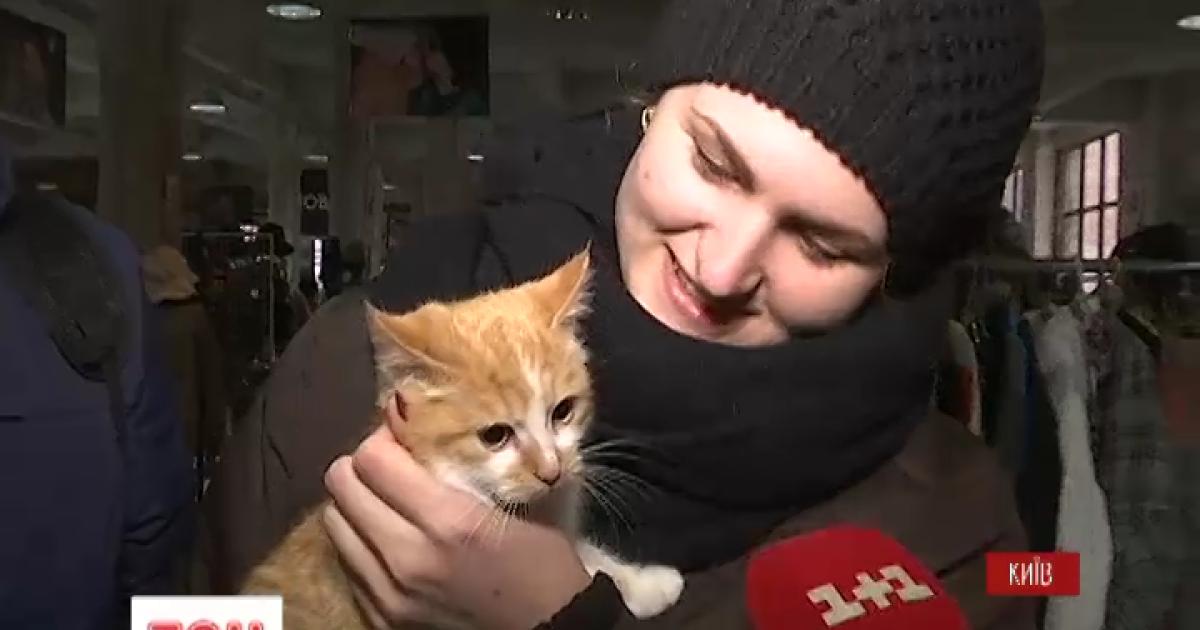 У Києві відбувся котячий ярмарок