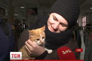 В Киеве состоялась кошачья ярмарка